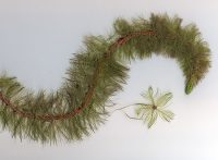 norther milfoil